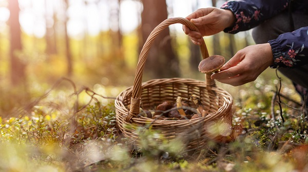 person putting a mushroom in a basket