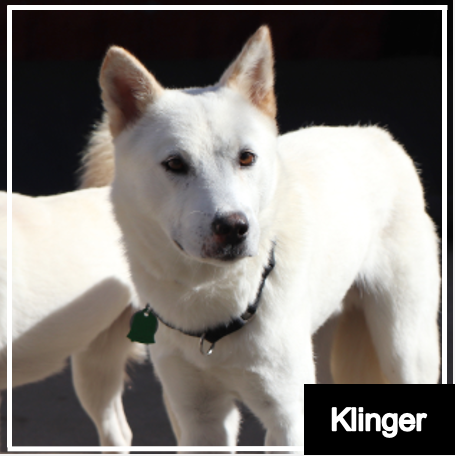 Cutie of the Month - Klinger