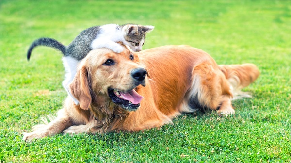 dog and cat playing in grass
