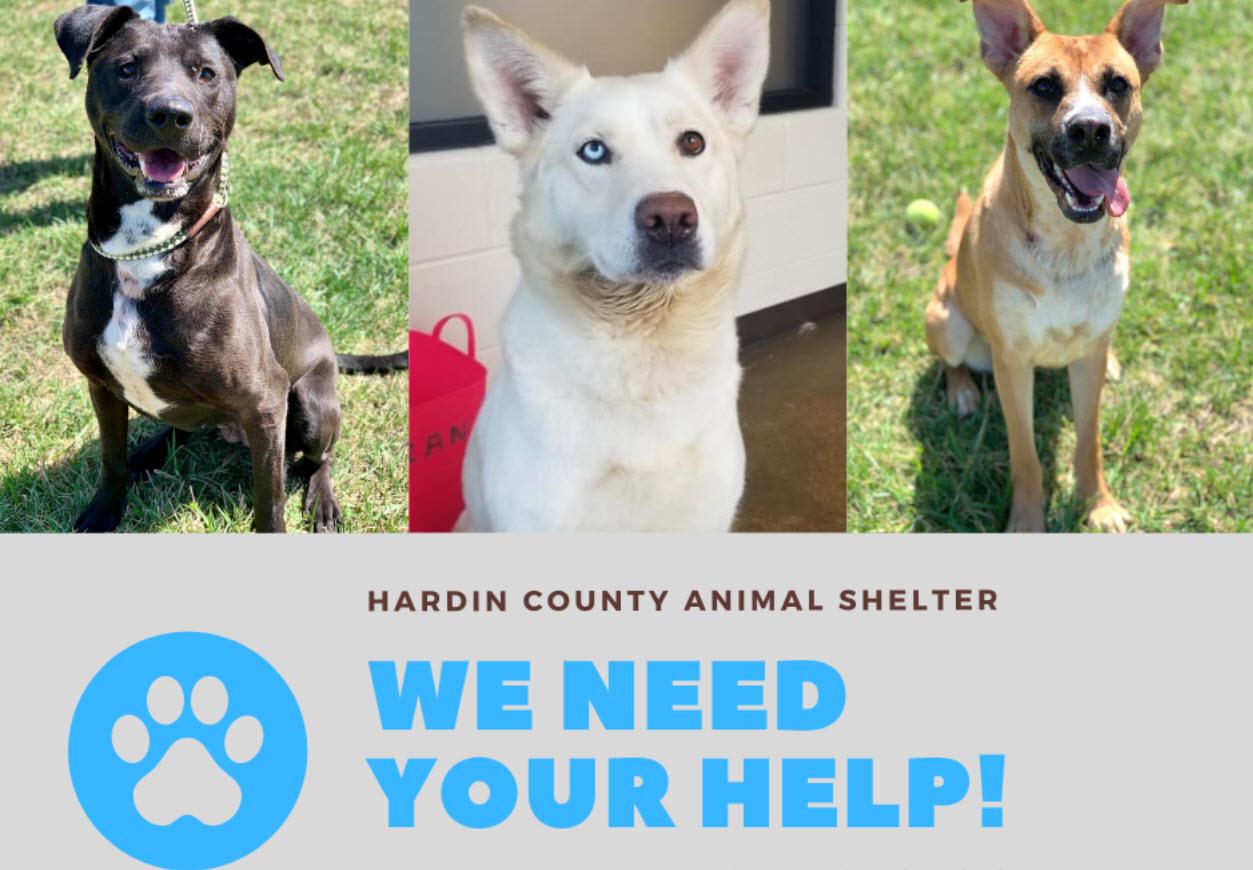 Animal Shelter Help