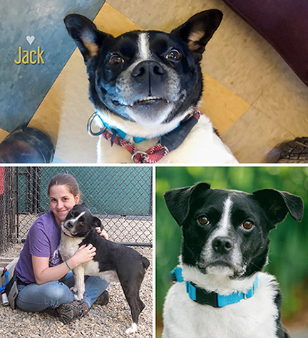 Adoptable Pet of the Month - Jack