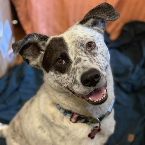 Adoptable pet of the Month