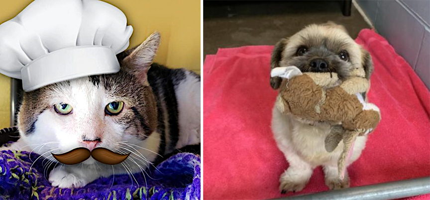 Adoptable Pets of the Month