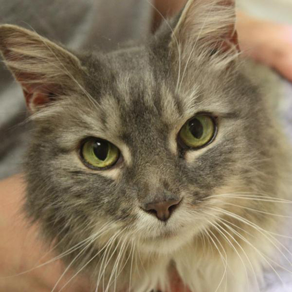 Adoptable Pet of the Month - Mya